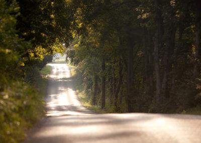 woodland-aug2013-2