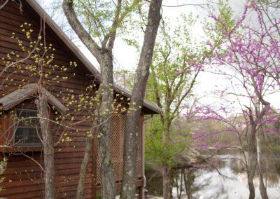 woodland-448