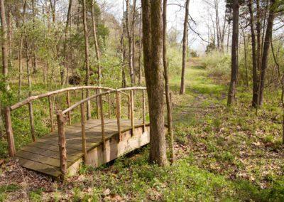 woodland-469