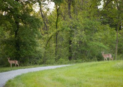 woodland-may2013-49